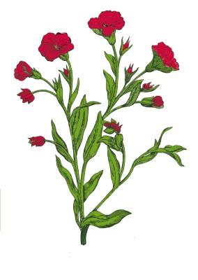 flower 5 for applique_001